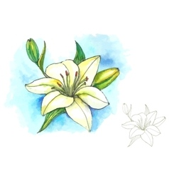 Watercolor and line-art lily vector
