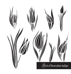 Set of decorative elements tulips and leaves vector image vector image