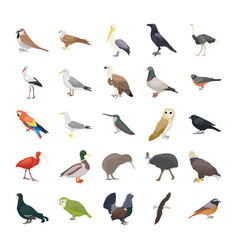 Birds flat icons vector