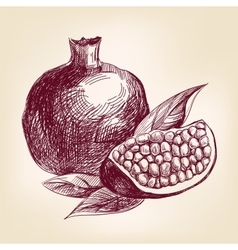 Fruit pomegranate hand drawn llustration vector