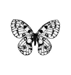 Hand drawing butterfly parnassius apollo vector