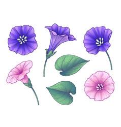 hand drawn colorful bindweed flowers set vector image