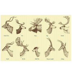 big set of horn antlers animals moose or elk with vector image vector image