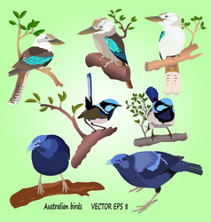 A set of realistis australian birds vector