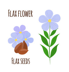 Flax flower seeds vegetarian food natural linen vector