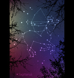 Sagittarius constellations sign with forest vector