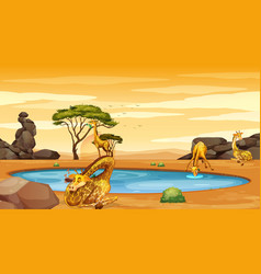 scene with giraffes pond vector image