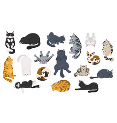 Sleeping cats poses flat different color simple vector