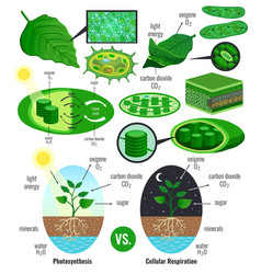 Biological photosynthesis infographic elements vector