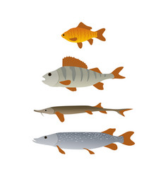 crucian and perch pike and trout vertical sketch vector image