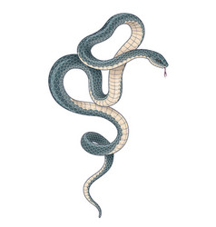 Hand drawn dark twisted snake vector
