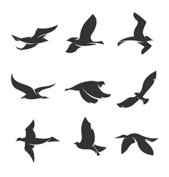 Set silhouettes birds in motion on a white vector