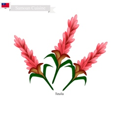Teuila Flower The National Flower of Samoa vector