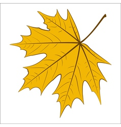 Yellow Maple Leaf vector