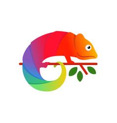 colorful chameleon logo design vector image