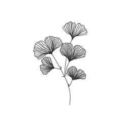 hand drawn ginkgo biloba branch on vector image