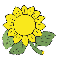 large yellow sunflower vector image