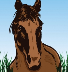 wild horse portrait illustration vector image vector image