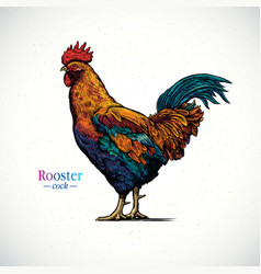 A rooster in a graphical style and painted in vector