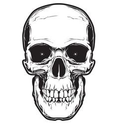 image skull vector image