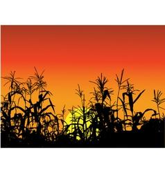 Corn silhouette background vector