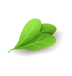 bunch fresh green spinach leaves icon isolated vector image