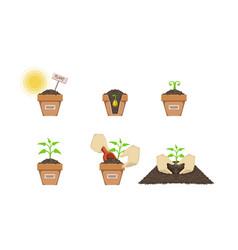 Plant growing process set gardening seedling vector