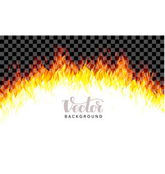 realistic transparent fire flames on vector image