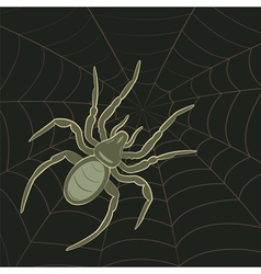 Spider on Web vector