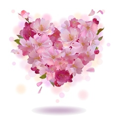 Cherry petal heart isolated on the white vector image