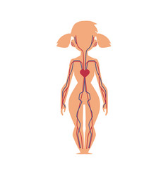 Anatomy chart of human blood system female body vector