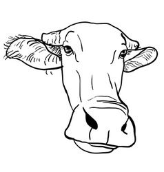Drawing of buffalo head vector image