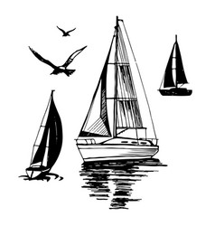 Sea yachts flying seagulls vector