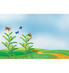 A corn field at the hill with butterflies vector