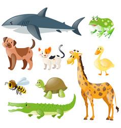 Animals set on white background vector