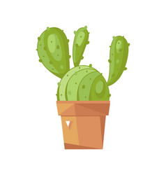Cactus in pot isolated icon vector