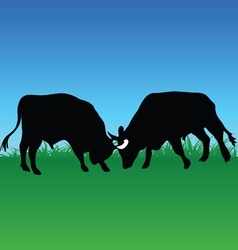 Fight bull vector