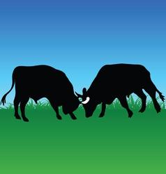 Fight bull vector