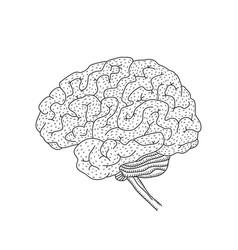 human brain isolated on vector image