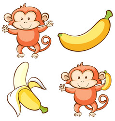 Isolated picture monkey and banana vector