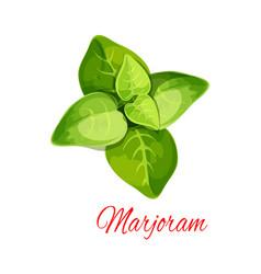 Marjoram or oregano spice herb cartoon icon vector