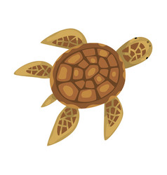 Turtle animal marine life element sea or ocean vector