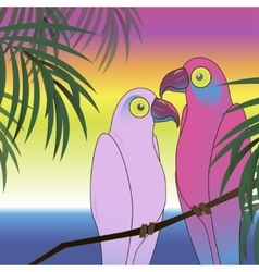 Two colourful parrot bird background vector image