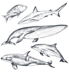 collection hand drawn ocean and sea vector image