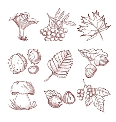 Hand Drawn Autumn Set vector