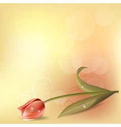pastel background with tulip vector image