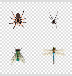 Realistic housefly damselfly spinner and other vector