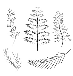 Various branches drawn in pencil and charcoal vector image