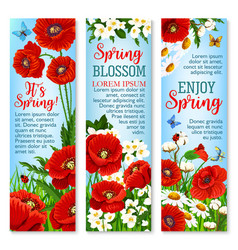 spring flower field for greeting banner template vector image vector image