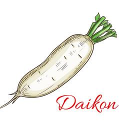 Daikon vegetable sketch icon vector
